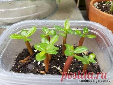 Как оживить просроченные семена