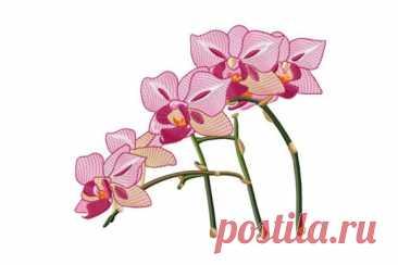 Красивая веточка розовой орхидеи