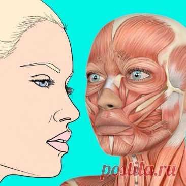 Техника, которая устранит отёки и провисание кожи Практика была предложена Чийо Хаяси, руководителем совета по вопросам костных болезней и опубликована в его собственной книге.
