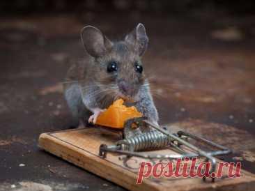 7 эффективных способов защиты каркасника от мышей, которые не потребуют много времени | Design-homes.ru | Пульс Mail.ru