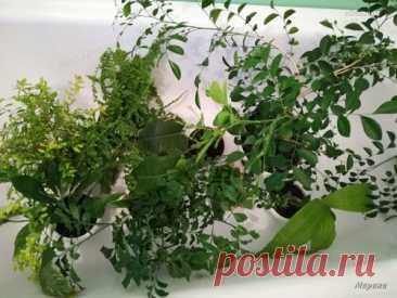 Комнатные растения осенью - Домашние растения