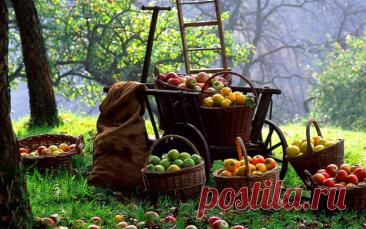 Самые важные осенние работы в саду и огороде - что сделать