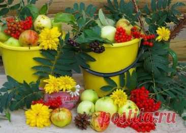 Сезонные работы в саду и огороде в августе | Дачный участок