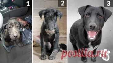 Фотографии брошенных и бездомных собак до и после того, как добрые люди дали им второй шанс на счастливую жизнь