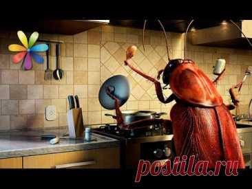 Как избавиться от тараканов навсегда? – Все буде добре. Выпуск 906 от 1.11.16