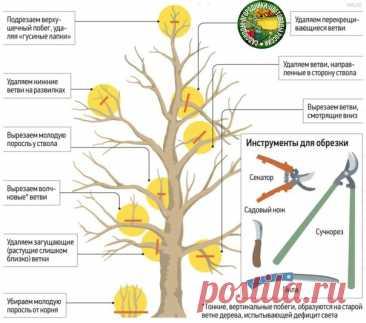 Правила обрезки крупных деревьев
