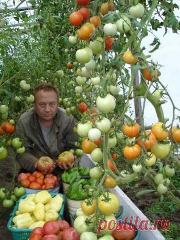 Уникальная технология выращивание овощей .