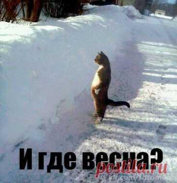 (9) Mis Mir@Mail. Ru