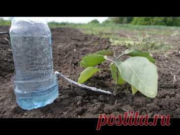 Капельный полив из бутылки - равномерный полив 30 дней