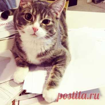 Кошки против книг: 25 кошек, которые хотят, чтобы вы прекратили читать