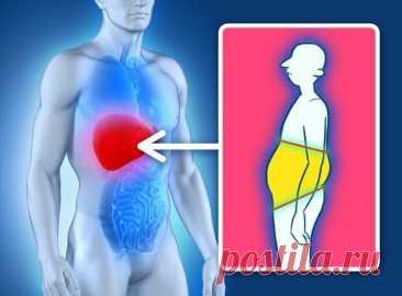 Причины лишнего веса, которые не связаны с питанием - Образованная Сова