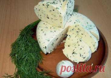 Домашний сыр без заморочек - пошаговый рецепт с фото.  Ингредиенты Замечательный   рецепт домашнего сыра Вкус типа сулугуни   или нежной брынзы Можно делать с укропом, кинзой, грецкими орехами, оливками, паприкой. Ингредиенты: 1 литр молока 1 ст.л. крупной соли 200 мл сметаны 3 яйца Приготовление 1. В молоко положить соль и все это закипятить. 2. Сметану взбить с яйцами (просто равномерно соединить) и тонкой струйкой влить в кипящее молоко. 3. Варить,  3-4 минуты. на   сковороде