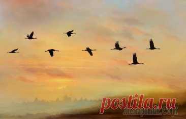Осеннее настроение… (Cтих) Укрывшись пледом из тумана,На ложе золотой листвы,Природа прилегла устало,Чтоб отдохнуть от суеты…В лесах не слышно птичьих трелей,Лишь только, журавлиный клинСкользит поверх печальных елей,В простора...