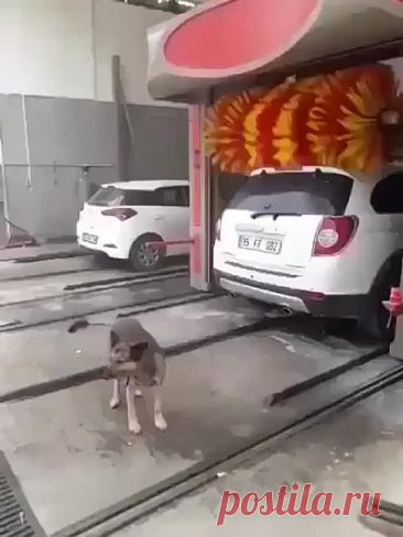 Продуманная собака