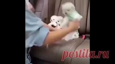 Собачки как игрушечные)))))))))))