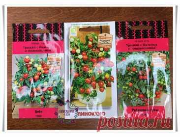 Огорода нет, а помидоры — есть. Показываю, как элементарно выращиваю их на балконе. Места нужно совсем чуть-чуть Огорода нет, а помидоры — есть. Показываю, как элементарно выращиваю их на балконе. Места нужно совсем чуть-чуть Собери букет цветов. Узнай название цветов, красивые цветы для любой девушки. Какие растения цветы, а какие нет. Сделай цветник своими руками и проверь как посажены цветы.