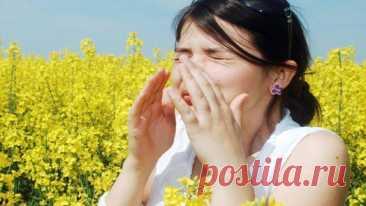 Народные средства от аллергии — 5 рецептов — ДОМАШНИЕ