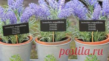 Как посадить лаванду семенами: подробный гид по выращиванию Рассказываем, какой сорт лаванды точно приживется в вашем саду и что нужно сделать, чтобы его вырастить. Лаванда – травянистое многолетнее растение, которое многие любят за приятный запах. Поэтому его часто добавляют в аромасаше, используют для создания лекарств и косметики. Считается, что легкий и ненавязчивый аромат успокаивает и избавляет от стресса. Кроме этого, у растения очень красивый внешний вид. Во время ...