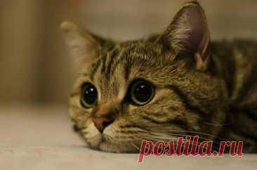 Что чувствует кошка, когда ее отдают другим людям? | В мире животных | Пульс Mail.ru Будет ли грустить кошка по старому хозяину? Как проходит адаптация взрослых кошек в новых условиях?