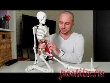 Нужна ли анатомия для укрепления здоровья и занятий йогой?