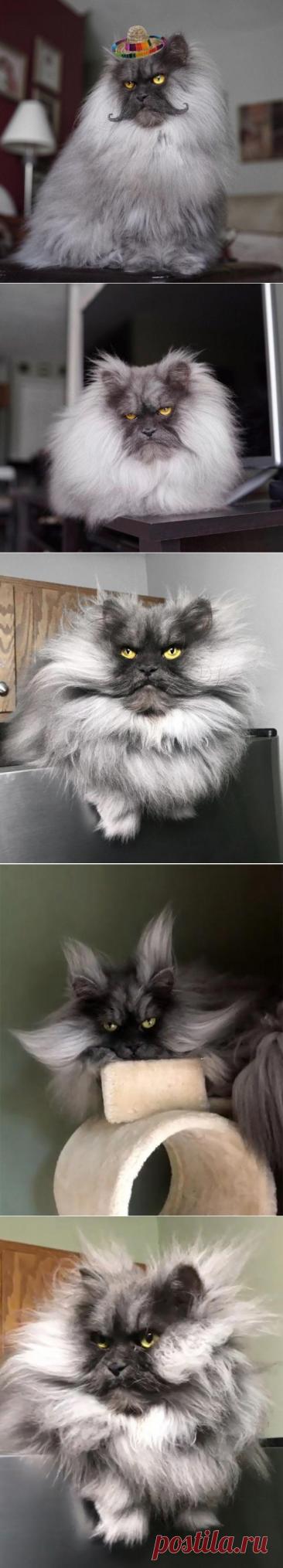 Кот с осуждающим взглядом