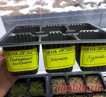 Какую тару подготовить для посева томатов в сезоне 2021. | Огородник из Рязани | Яндекс Дзен