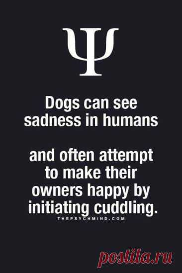 Dogs can see sadness in humans