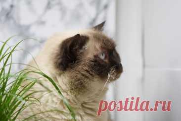 Полезные добавки для кошек, которые почти наверняка есть у вас дома | Зверски интересно | Яндекс Дзен