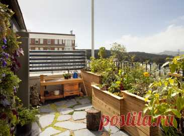 Огород на балконе, фото и идеи — что посадить в мини-огород на лоджии или балконе в квартире   Houzz Россия