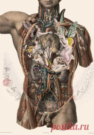 21 признак плохого пищеварения Каждому человеку важно хорошо выглядеть. Но, чтобы иметь красивое тело, свежую чистую кожу, ясное мышление и хорошее самочувствие, необходимо правильно питаться. Даже самые здоровые продукты не принесут пользу, если организм не может их переварить и усвоить.
