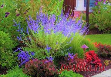 Засухоустойчивые растения, которые не боятся жары: красивая клумба с минимальным уходом   GardenLife   Яндекс Дзен