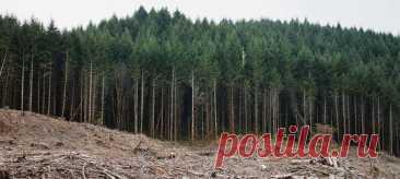 Стремительное исчезновение лесов все чаще становится одной из главных повесток нашей жизни, поэтому ботаники решили предостеречь непосвящённых – если бездумно высаживать абы что, можно сделать ещё хуже. А чтобы было проще разобраться, исследователи создали свод из 10 «золотых правил» по восстановлению лесов.