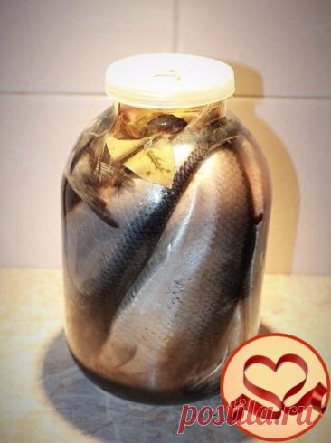 """Очень простой рецепт засолки селедки!  """"СЕЛЕДКА В БАНКЕ"""" Итак, первое - покупаем свежую селедку, ну или свежемороженую, что абсолютно не принципиально, главное, чтобы она вам однозначно нравилась по внешнему виду   Второе - приносим ее домой, нежно промываем под проточной водой и закидываем в банку с головой, хвостом и прочими частями рыбьего тела. То есть целую. Да, в нашу трехлитровку может поместиться от трех до пяти рыбок.   И заливаем холодным рассолом который мы уже ..."""