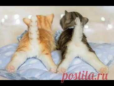😺 Любимые хвостики! 🐈 Подборка смешных кошек и  котят для хорошего настроения! 😸