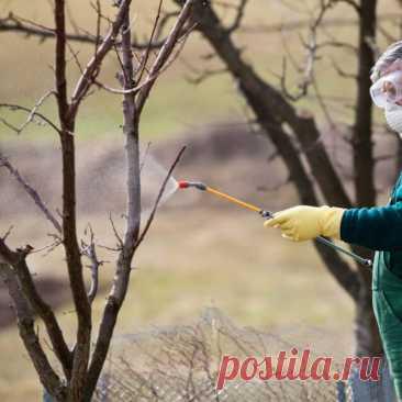 Обработка сада весной – ПОШАГОВЫЙ план действий | ЗАЩИТА от ВРЕДИТЕЛЕЙ | Яндекс Дзен