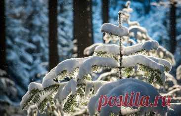 Последняя неделя января: Полнолуние и ретроградный Меркурий | Добрые перемены | Яндекс Дзен