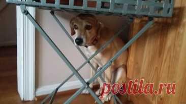 Наказание собаки. Ошибка, которая вводит в заблуждение питомца | Рекомендательная система Пульс Mail.ru