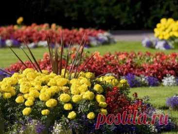 Лучшие многолетние цветы для вашего сада, цветущие все лето: список, названия, краткая характеристика, фото