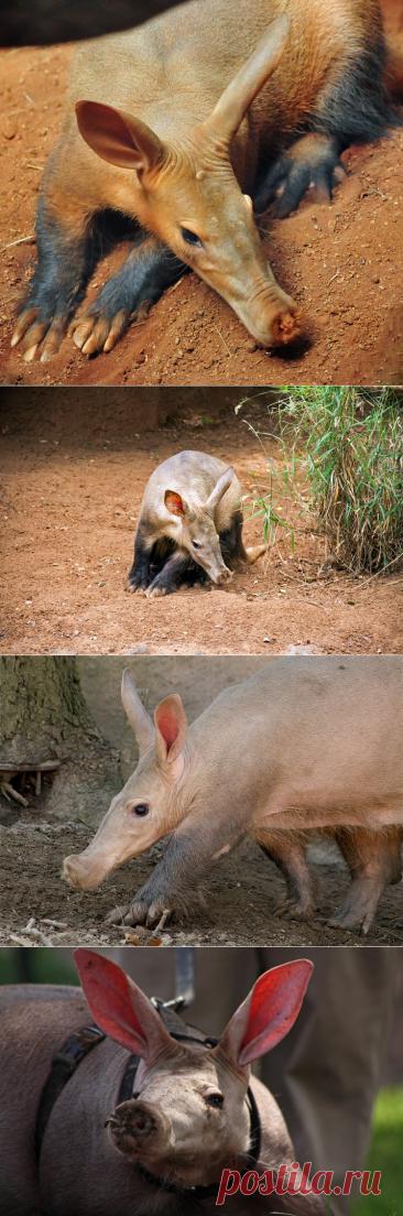 Самые необычные животные в мире (часть 46)