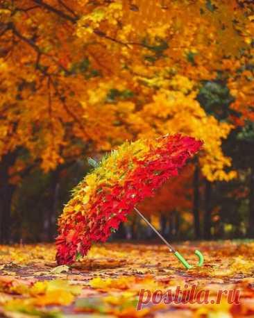 Полезная подборка мастер-классов на осеннюю тему для детского сада и школы | Тётушка ЛЮ | Яндекс Дзен