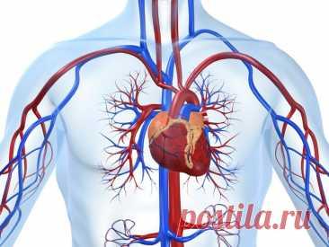 Как распознать болезни сердца по внешним признакам? | Здоровое сердце и сосуды | Яндекс Дзен