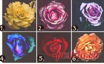 Цвет розы может многое рассказать о вашем характере Перед вами интересный психологический тест с цветами. Если вы хотите узнать что... Читай дальше на сайте. Жми подробнее ➡