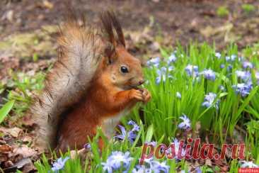Фото: Вспоминая весну. Фотограф Владимир Тимошенко. Фото животных - Фотосайт Расфокус.ру