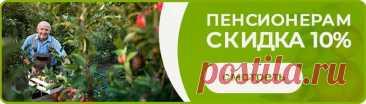 Саженцы Магнолии: Купить в Владимире - Цена от 410 р. | Доставка Почтой