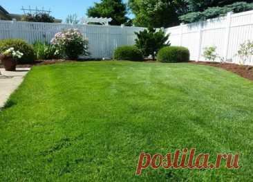 Как посеять газонную траву своими руками? Английский метод. Этот приём английских садоводов поможет вам быстро и правильно посеять газонную траву своими руками. А ведь, как известно, англичане толк в газонах знают.