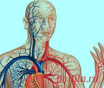 Как очистить сосуды и восстановить капилляры Регулярное очищение сосудов – залог здоровья и долголетия. С помощью народных методов можно избавиться от отложений солей, которые приводят к раннему инсульту или инфаркту, хронической гипертонии.Прос...