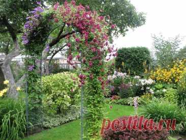 Прекрасный сад Тамары Шпилиной в Псковской области | Сады и цветы | Яндекс Дзен