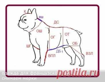 ¡COSEMOS la ROPA Y el CALZADO PARA los BULLDOGS FRANCESES!!! Los patrones, poshagovye las instrucciones.