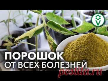 ОПРЫСКАЙТЕ ЭТИМ РАССАДУ ОТ ВСЕХ БОЛЕЗНЕЙ И ВРЕДИТЕЛЕЙ! Экологичное средство из Вашего холодильника