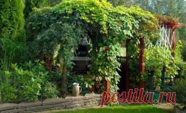 Лучшие многолетние вьющиеся растения для беседки и сада (21 фото) | Деревья и кустарники (Огород.ru)